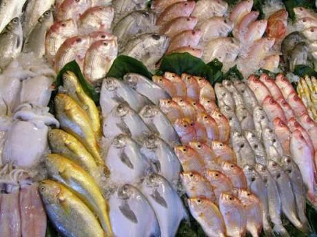 ribe-zdrave-ribe