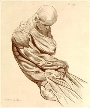 anatomija.jpg
