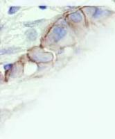 patology.jpg
