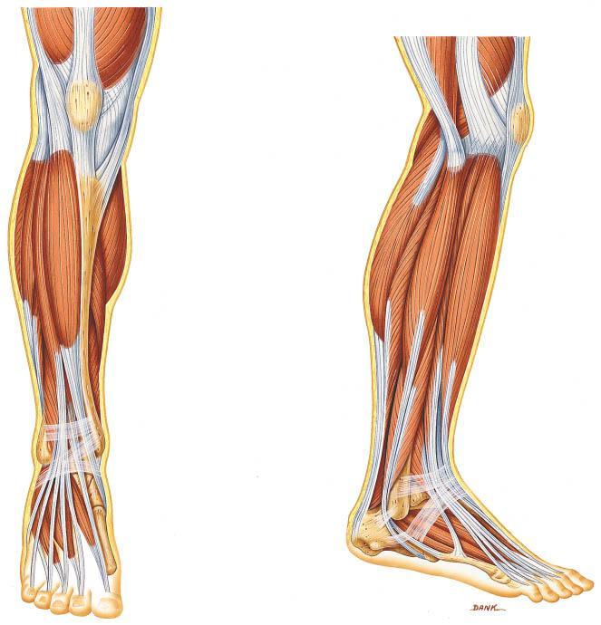 anatomija-zdravstvo