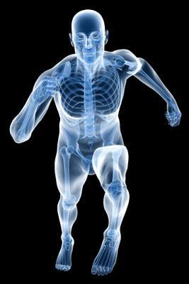 fiziologija-cloveka-fiziologija