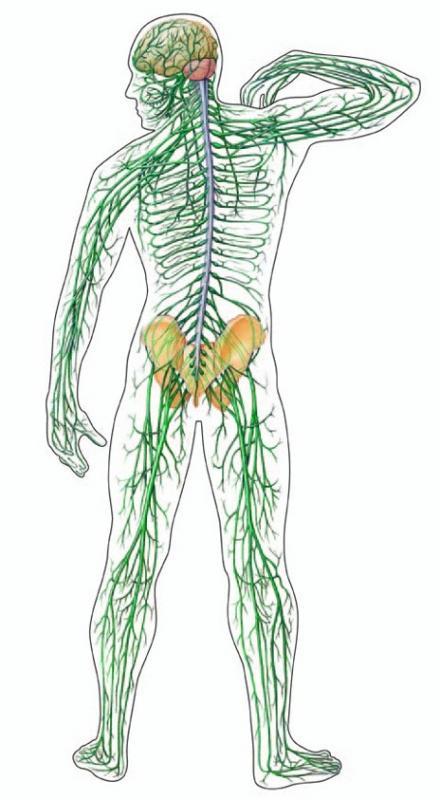 nevrologija-nevro