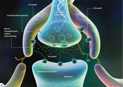 nevrologija-astrocit